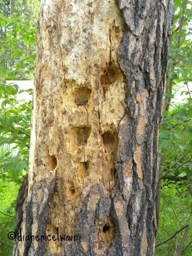 treewithholes4