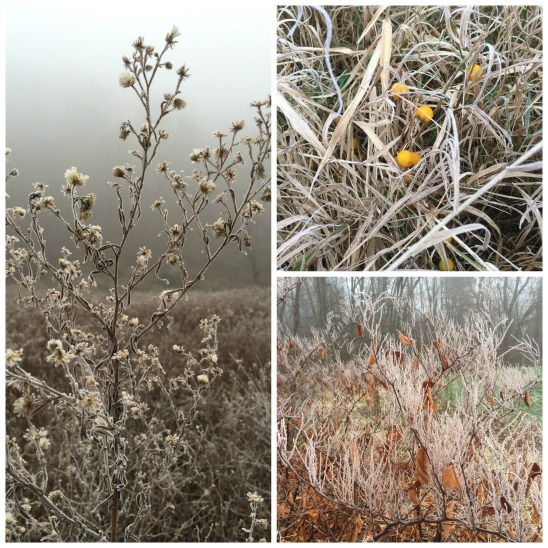 frostyCollage